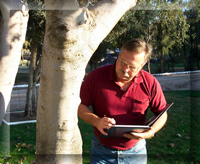 San Diego tree appraisal